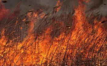 пожары в Запорожской области