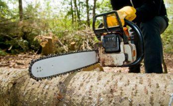 вырубке деревьев