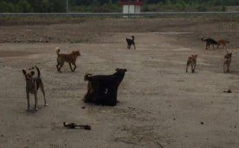 расстреляли собак