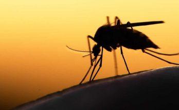 тропической малярии